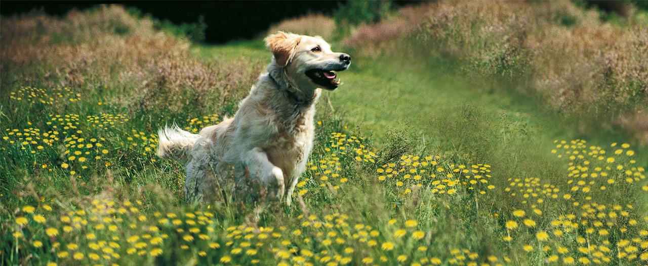 Beaphar honden